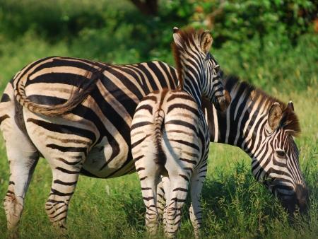 Safaris dans la plus grande réserve animale d'Afrique du Sud