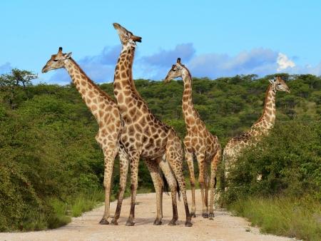 Journée complète de safari
