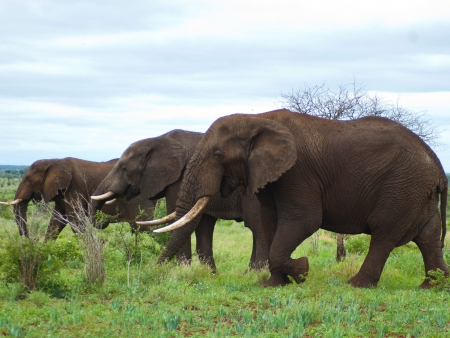 Journée de safari au Kruger