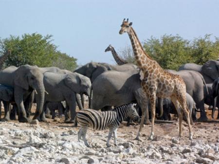 Echappée sauvage dans le mythique parc Kruger