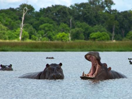 Un sanctuaire d'une faune riche et diversifiée