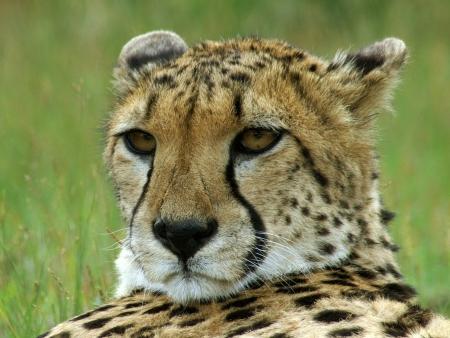 Les joies du safari au Malawi