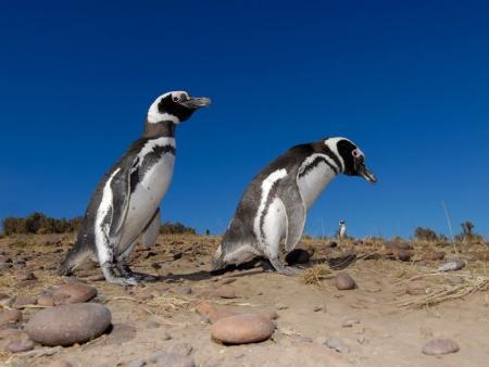 Découverte des îles Shetland du Sud et de la Péninsule Antarctique