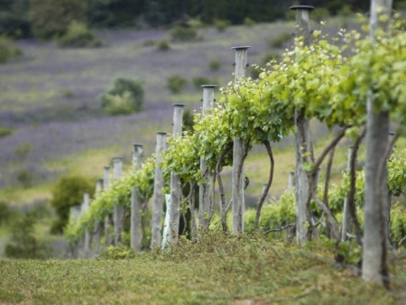 La région viticole de Barossa Valley