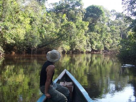 Plantes médicinales d'Amazonie