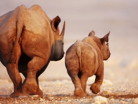 Safari à Etosha