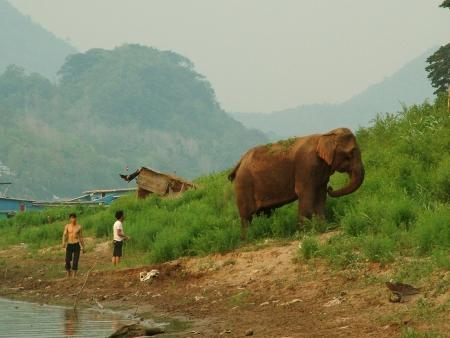 Rencontre avec des éléphants
