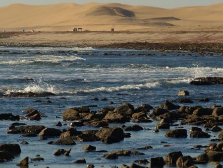 Otaries de Cape Cross
