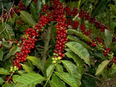 Sources chaudes et plantations