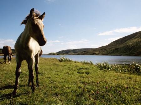 Vers la Patagonie