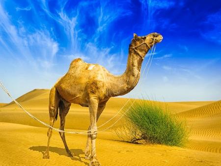 Marché aux chameaux et jardin archéologique