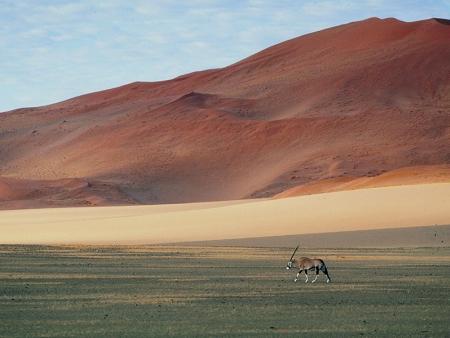 Au cœur des dunes rougeoyantes