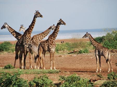 Deuxième journée dans le Serengeti