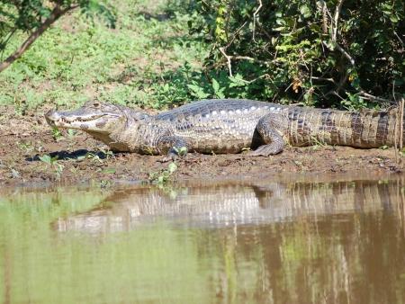 Pirogue en Amazonie