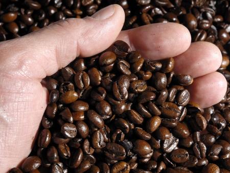 Du caféier à votre tasse !