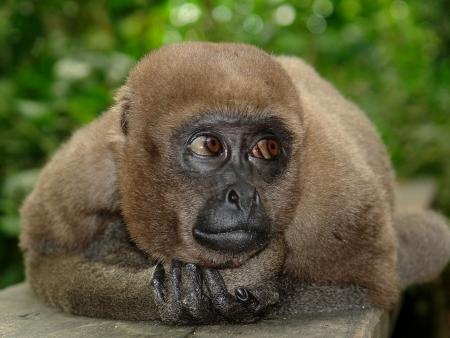 Canopée et cimes de la forêt amazonienne