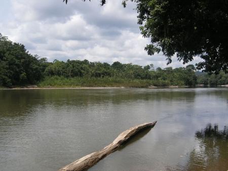 A vous l'Amazonie !