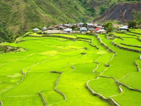 Randonnée au cœur des rizières