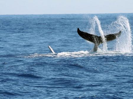Nagez avec les baleines !