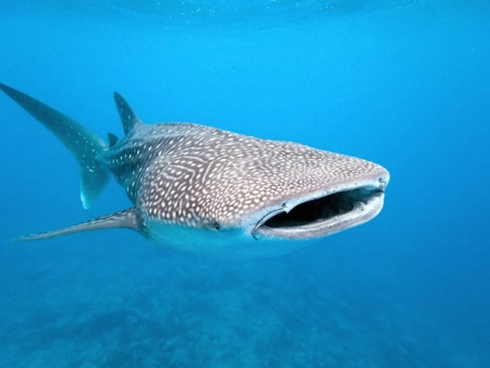 Exploration de la faune sous-marine