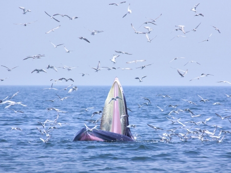 Arrivée sur l'île des baleines