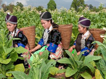 Sur la Route de Chiang Mai