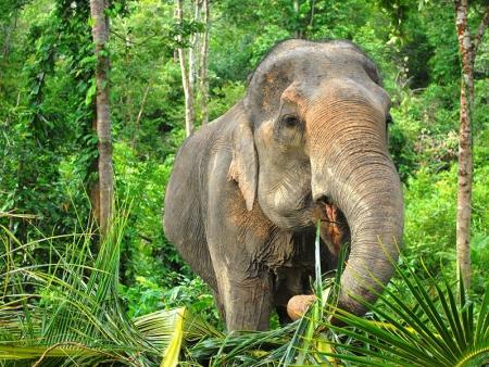 Eléphants, orchidées et temples de Chiang Mai