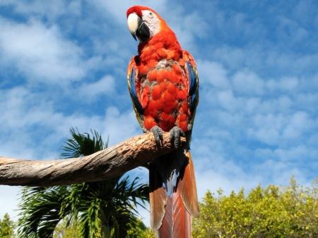 Parc de Jungle Island