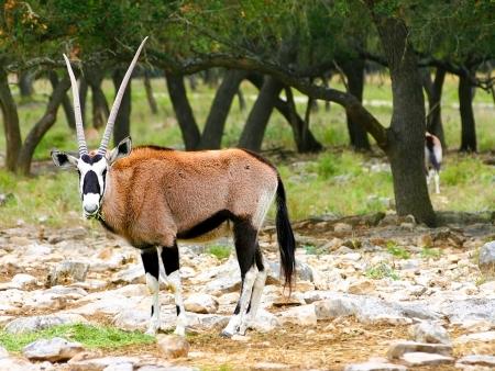 Arrivée en Tanzanie, safari en terre Masaï