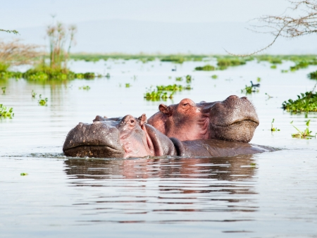 Le ballet des flamants roses au Lac Nakuru