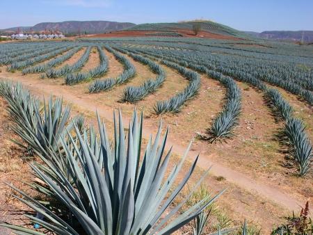Des champs d'agave aux rives du Pacifique
