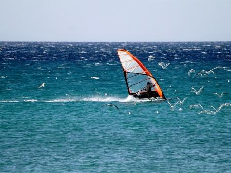 Plongée à Caye Caulker ou planche à voile