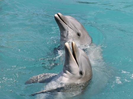 Requins, baleines, dauphins