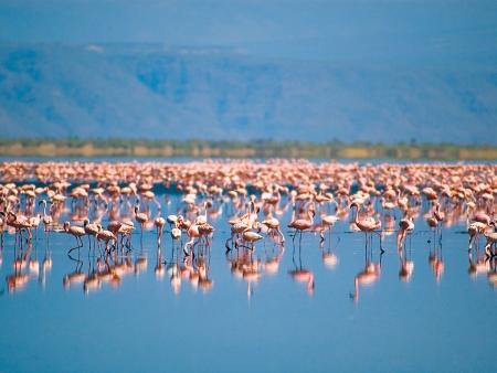 Marches et randonnées avec les Masaïs