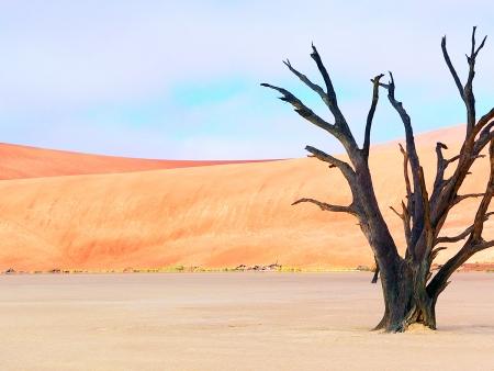 L'aube se lève sur les dunes de Sossusvlei (270km)