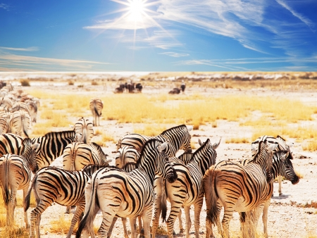 Journée entière de safari