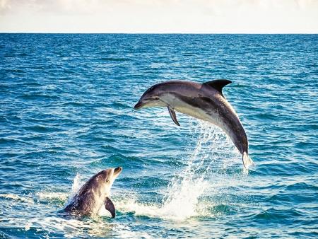 Séjour en bord de mer