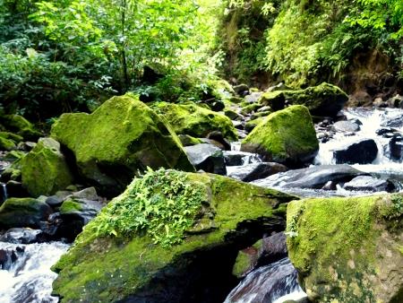 Les brumes enivrantes de Monteverde