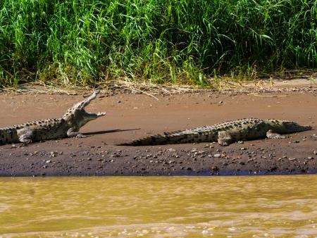 Entre les mâchoires du Crocodile !