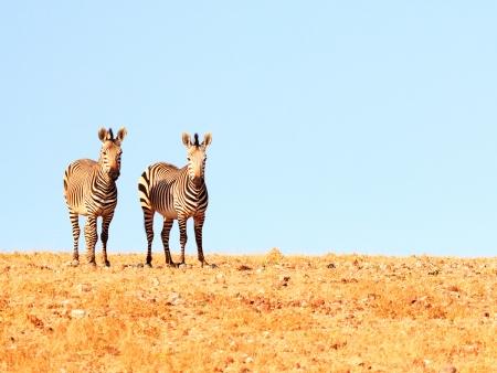 Paysages époustouflants et éléphants du désert ! (260 km)