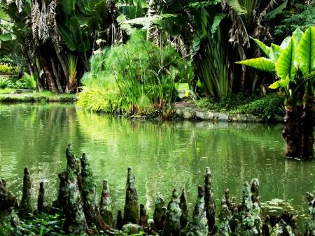 Bienvenue au Royaume des tortues, crocodiles et singes !