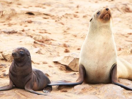 Sensations fortes entre dunes et océan à Swakopmund
