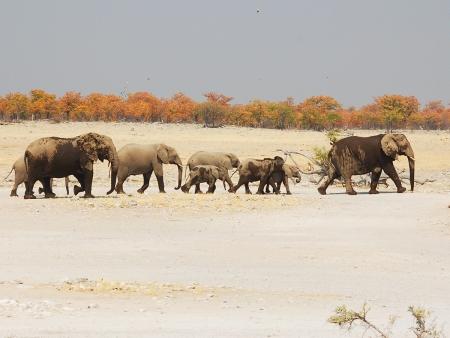 Safari dans le lit de la rivière Hoarusib